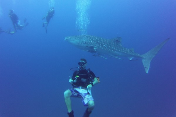 Whale Shark at Chumphon Pinnacle