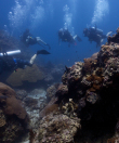 Dive Trip Koh Tao Thailand 3