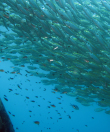 Dive Trip Koh Tao Thailand 5