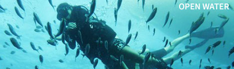 Open Water Scuba Diving Koh Tao