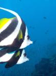 Discover Scuba Diving Koh Tao 7