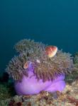 Discover Scuba Diving Koh Tao 8