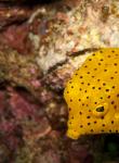 Dive Master Scuba Diving Koh Tao Thailand 1