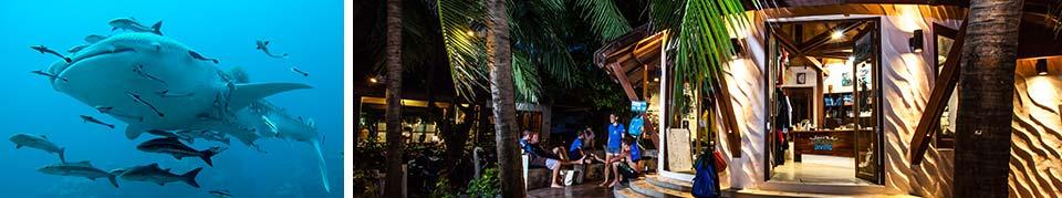 Divemaster Scuba Diving Koh Tao Thailand