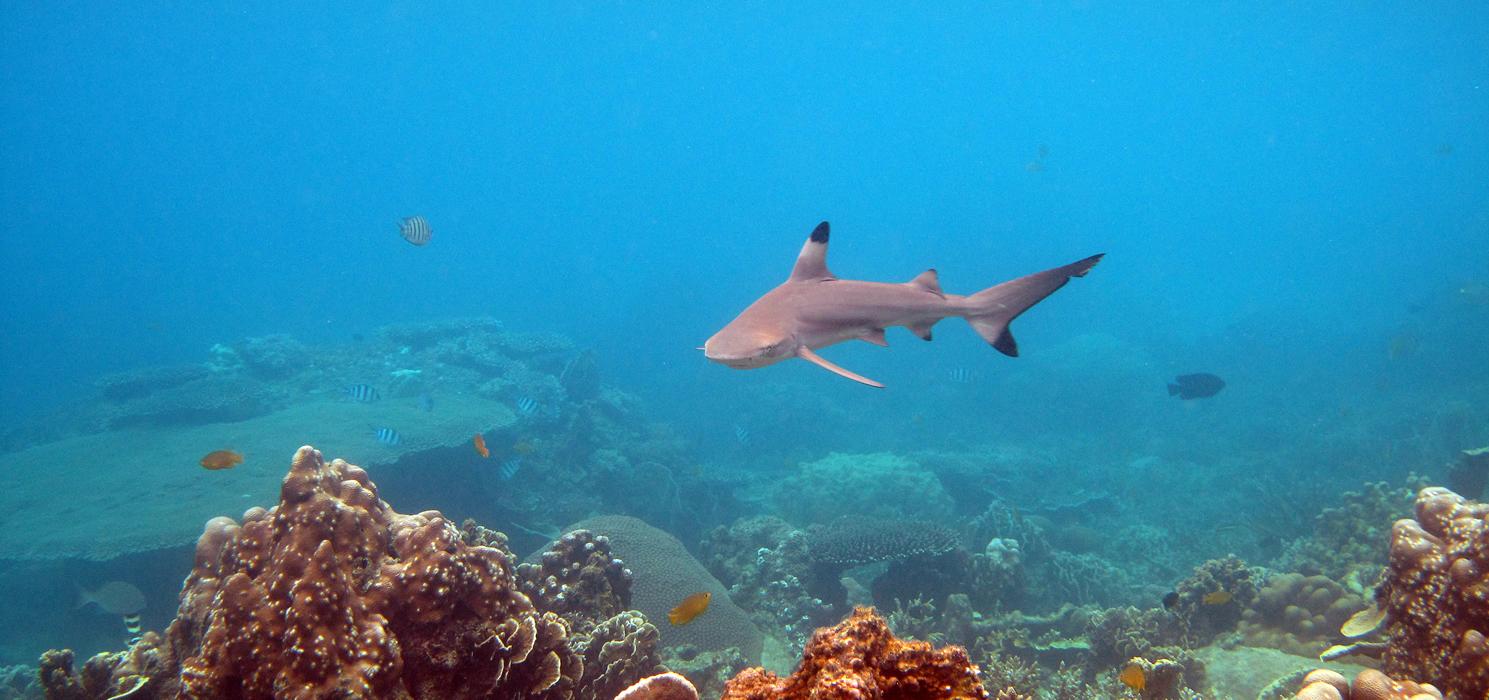 Eco friendly dive center 100 projectaware - Koh tao dive center ...