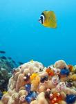 Scuba Diver Koh Tao Thailand 2