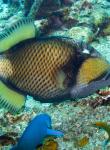 Scuba Diver Koh Tao Thailand 8