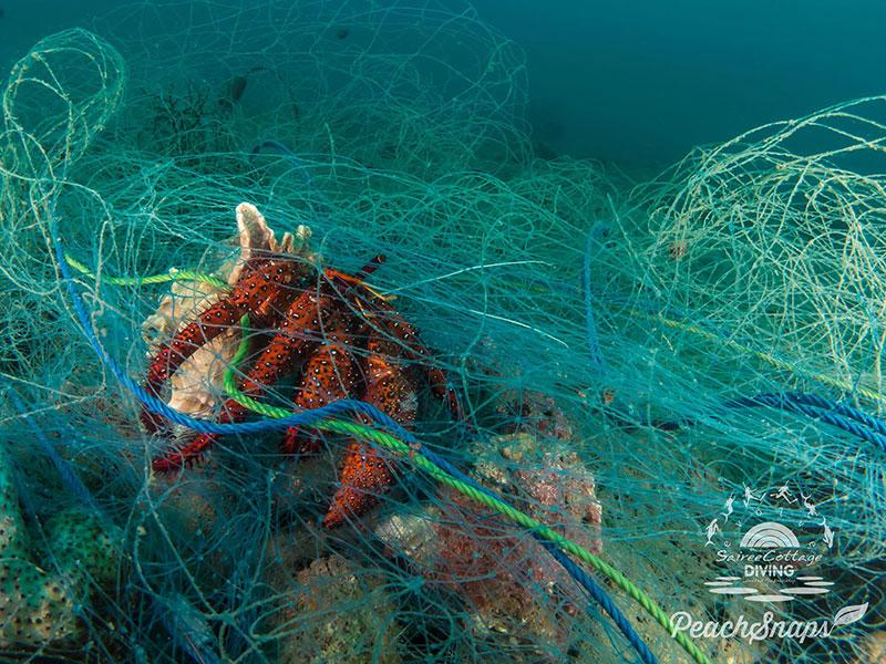 Hermit Crab Stuck Ghost Net