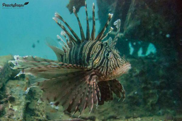 Fish Self Defense