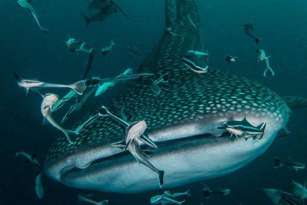 Marine life behavior study for underwater photography