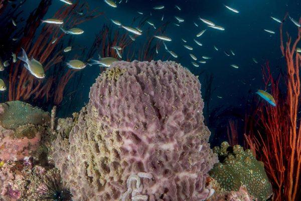 Inward Lighting - Underwater Photography Tip