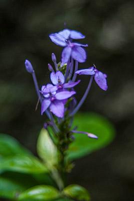 Purple Flowers in Shallow Depth Of Field
