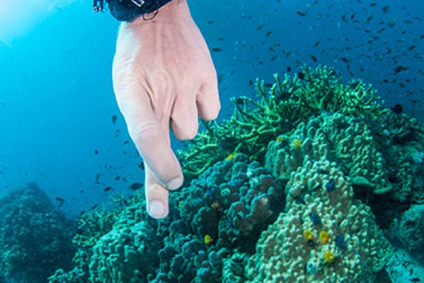 Why Does Diving Make You Pee & Will My Wetstuit Forgive Me?