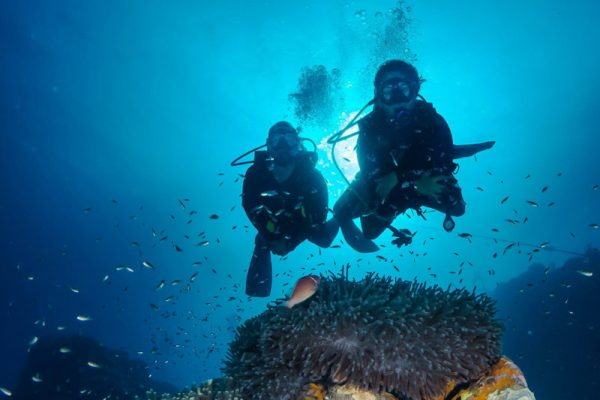 Why Scuba Dive? There Is More To Diving Than You Might Think