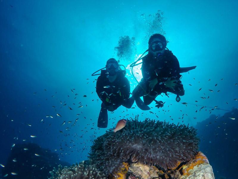 Why Scuba Dive