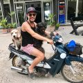 Dogs on Koh Tao are friendly and know how to ride bikes!