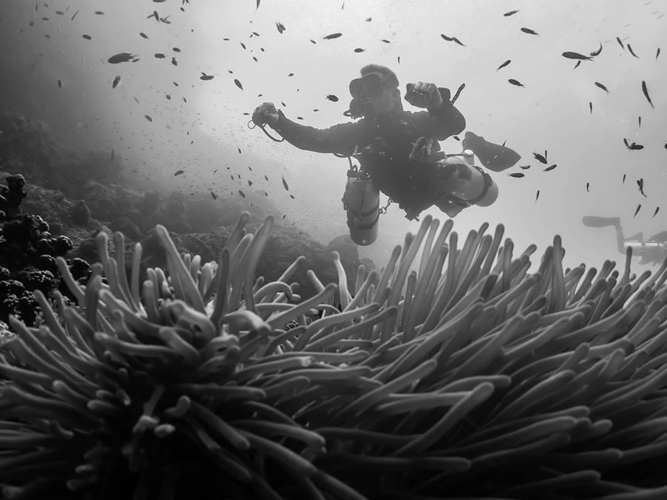 Sidemount Diver Above Reef Koh Tao