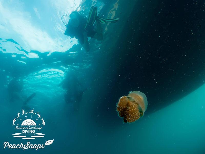 Jelly Fish Ocean Health