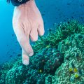 Why Does Diving Make You Pee
